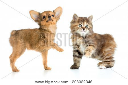 puppy and young cat isolated