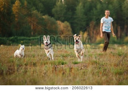 Three Dogs Running On The Field