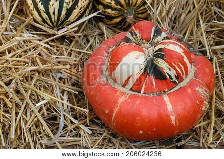 Red Pumpkin On A Straw