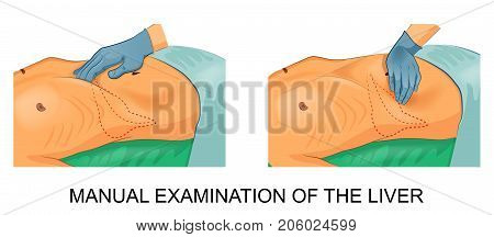 vector illustration of a manual examination of the liver