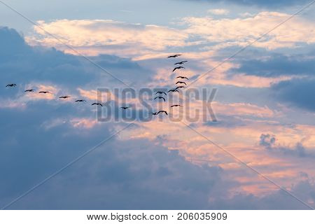 a flock of geese flying away from the changing weather