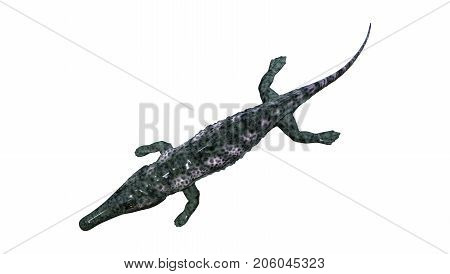 3D Rendering Archegosaurus On White