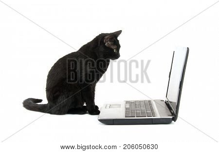 Black cat staring at a laptop screen, on white background