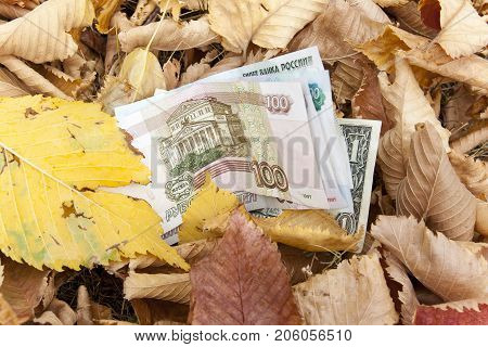 Money is sprinkled with fallen leaves. A few paper bills fell to the ground in autumn foliage. The money is lost. Found paper money