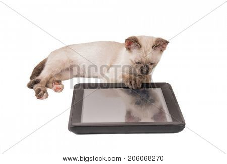 Siamese kitten keenly looking at a tablet computer, with her paw on the edge, on white