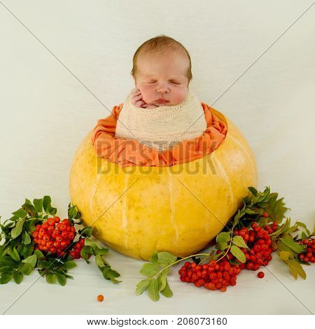 A beautiful newborn baby in a yellow pumpkin and in clusters of orange mountain ash. Autumn composition. Autumn and newborn baby. Advertising