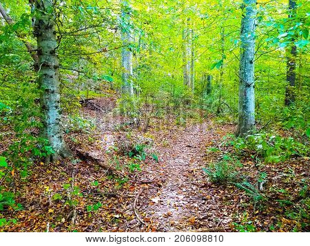 A beautiful green nature trail through the trees in a forest. Copy space.