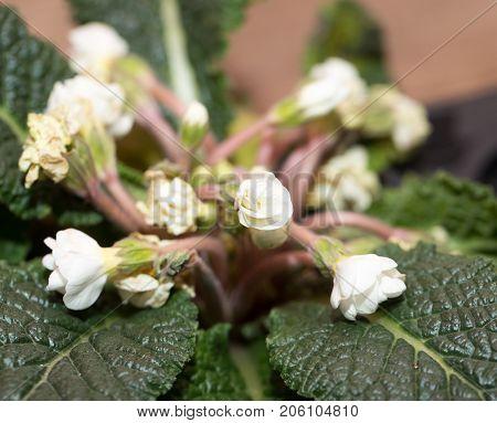 small white flowers. macro . Photos in the studio