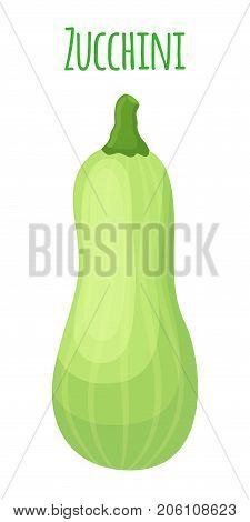 Fresh zucchini squash, vegetarian vegetable. Whole courgette. Made in cartoon flat style. Vector illustration