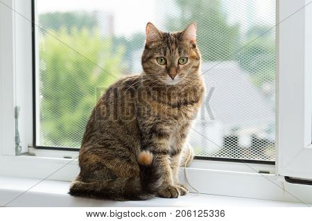 three-colored cat with green eyes sits on a window equipped with a metal mesh