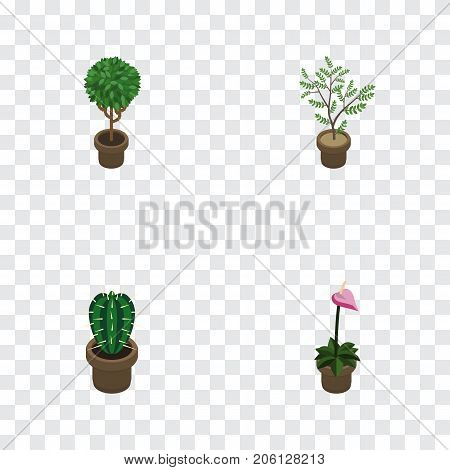 Isometric Flower Set Of Grower, Peyote, Fern And Other Vector Objects