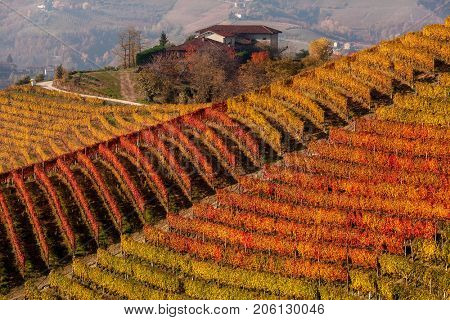 Rows of multicolored autumnal vineyards on the hill in Piedmont, Northern Italy.