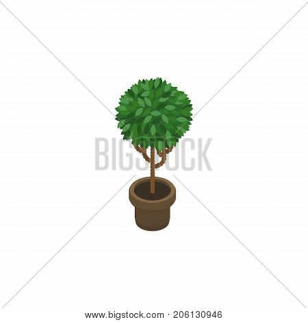 Tree Vector Element Can Be Used For Flower, Flowerpot, Plant Design Concept.  Isolated Blossom Isometric.