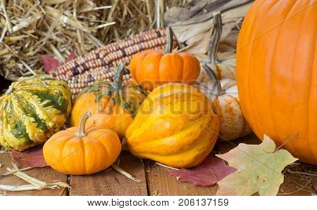 Colorful pumpkins and gourds on a wooden surface