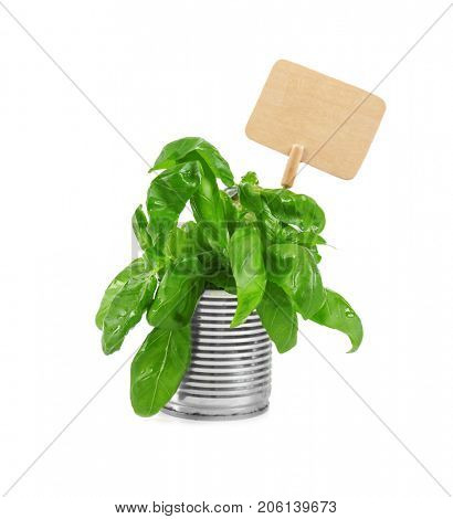 Young green basil with nameplate in tin can isolated on white. Recycling garbage concept