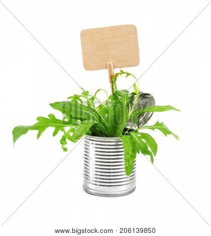 Young green plants with nameplate in tin can isolated on white. Recycling garbage concept