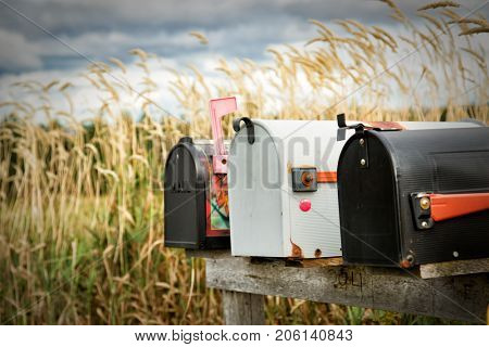 Tree postal boxes in a at the edge of a field