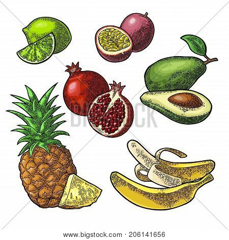 Set tropical fruits. Isolated on the white background. Pineapple, lime, banana, pomegranate, maracuya, avocado. Vector color hand drawn vintage engraving illustration for poster, label and menu.