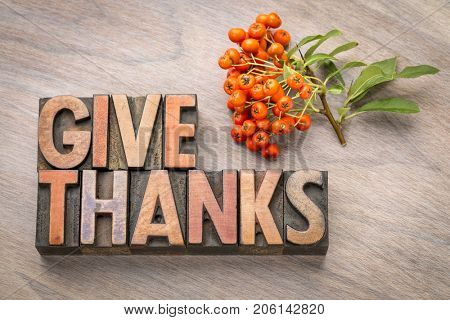 give thanks - Thanksgiving concept - word abstract in vintage letterpress wood type printing blocks with firethorn berries