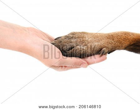 Dog paw and human hand, isolated on white. Concept of volunteering and animal shelters