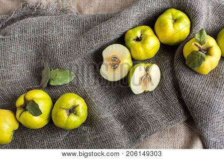 botany, farming, harvest concept. top view on few fruits of almost lemon fresh colour, they are called quince. one of them is cut into two equal parts, there are lots of pits in its heart