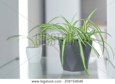 Pot with houseplant on blurred background