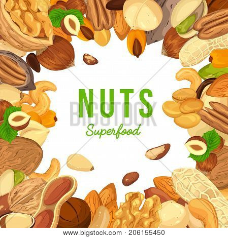 Nut in their shells and kernels for advertising banner. Pistachio and ripe hazel, pecan and raw filbert, walnut ingredient for vegetarian or vegan diet. Agriculture and botany, plant and shop ads theme