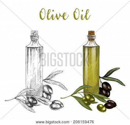 Sketched branch of olive berries and leaves, oil in glassware bottle with cork. Veggie natural product and vegetarian diet ingredient, vegan nutrition product. Healthy drink and food, cuisine theme