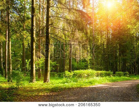 Spring forest landscape with trees in the spring forest in sunny spring weather. Sunny spring forest nature. Row of spring forest trees lit by sunlight. Spring in the forest