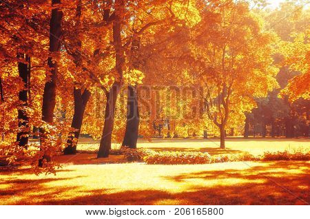 Fall landscape. Colorful fall park in with golden fall trees in sunny weather. Sunny fall landscape view of fall park with golden fall trees