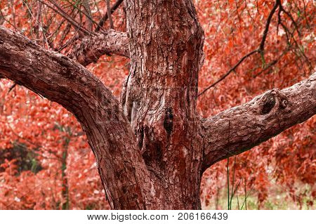 a beautiful autumn tree of his branch resembles hands placed in different directions and in the middle of a hollow eye