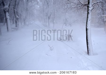 winter landscape - lonely benches in the park under the snow