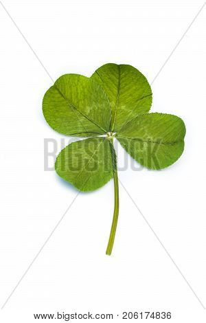 Vertical closeup of a single green four leaf clover against a bright white background