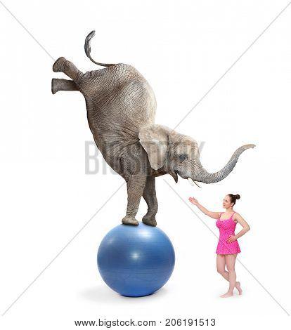 Circus clown girl and elephant balancing on a blue ball.