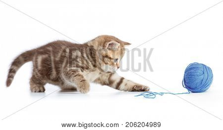 Young cat playing with blue clew isolated