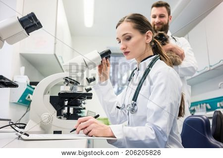 Veterinarian doctors analyzing blood samples of cat in laboratory under microscope
