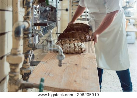 Baker woman getting bread loafs out of bakery oven putting them on a board