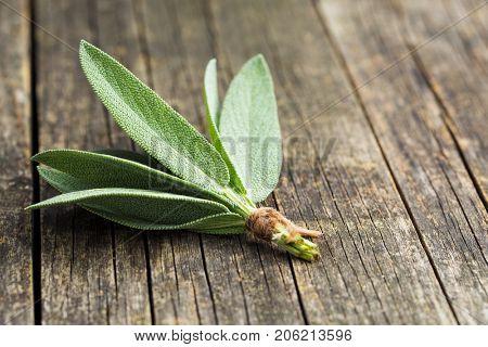 Salvia officinalis. Sage leaves on old wooden table. Garden sage.
