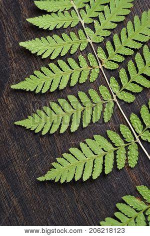Fern leaf on dark wooden surface, fragment