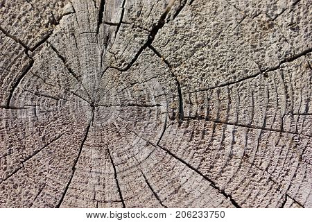 Rustic weathered unfinished wood grain background texture