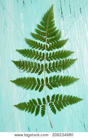 Turquoise oil painted wooden board and fern leaf