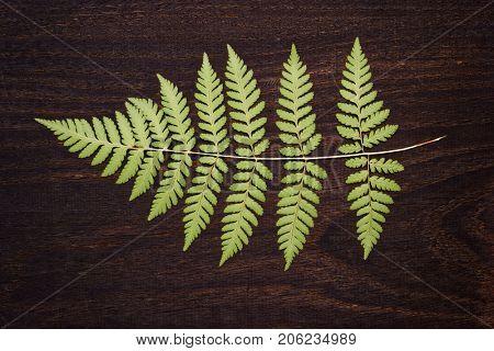 Fern leaf on dark wooden surface