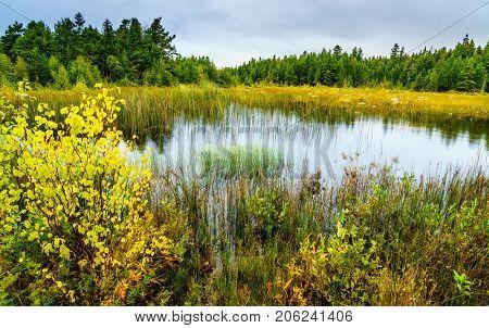 Scenic view of bog area in Michigan Upper Peninsula
