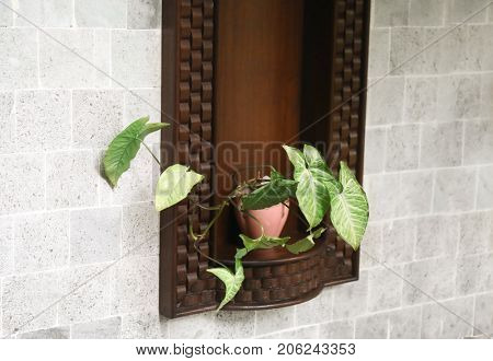 Pot with tropical plant in wall niche outdoors