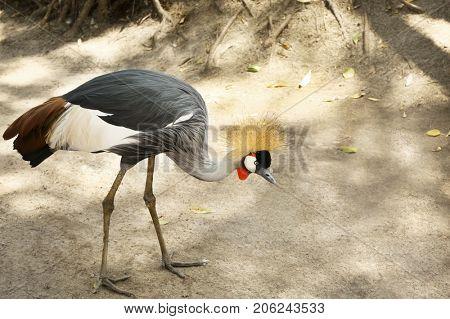 Exotic bird in zoological garden