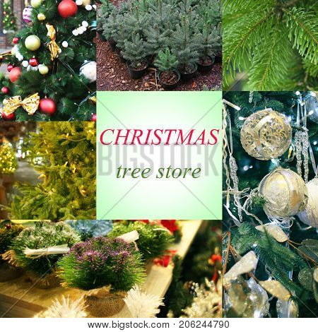 Collage for Christmas tree shop concept