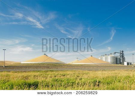 Grain silo's elevator and a mountain of grain in the Palouse, Washington