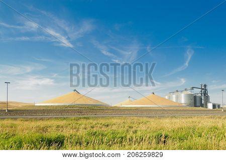 Grain silo's elevator and a mountain of grain in the Palouse, Washington