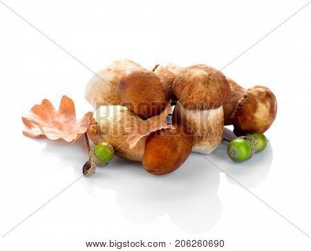 Mushroom Boletus isolated on White Background. Autumn Cep Mushrooms. Ceps Boletus edulis over White Background, close up on the table. Cooking delicious organic mushroom. Gourmet food.