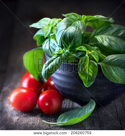 Basil and tomatoes on wooden table. Italian Homemade Food ingredients still life. Cherry tomatoes, fresh basil leaves. Cooking Pasta. Dinner. Mediterranean cuisine. Rustic style dark still-life.